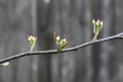 Spring - Portland, Oregon