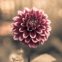 Summer Flower - Cannon Beach, Oregon