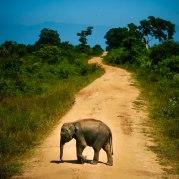 Baby Elephant - Sri Lanka