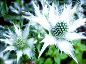 Flowers - Portland, Oregon