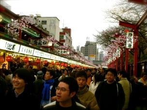 Cherry Blossoms - Asakusa, Japan
