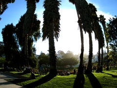 Dolores Park Trees - San Francisco, United States