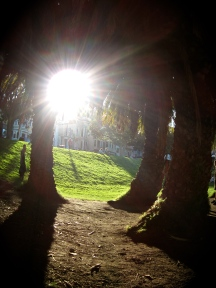 Dolores Park Grove - San Francisco, United States