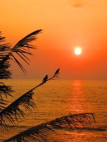 Sunset - Verkala, India