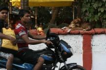 Locals - Palolem, India