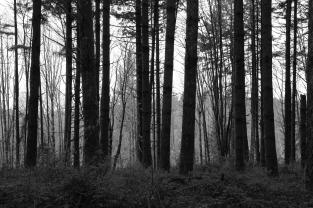 Trees - Mulino, Oregon