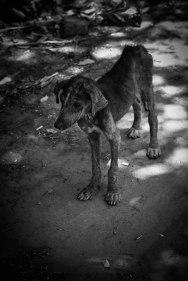 Libertad Pup, El Salvador - Erin J. Bernard