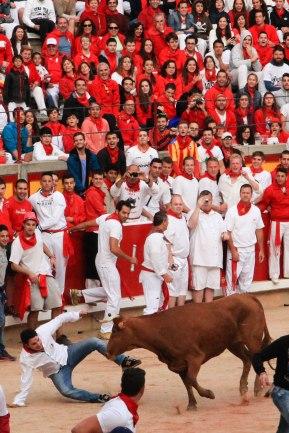 Baby bull; Pamplona, Spain - Erin J. Bernard
