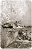 Kasbah kitty, Tangier - Erin J. Bernard