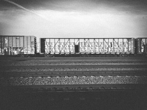 Amtrak Train - Erin J. Bernard