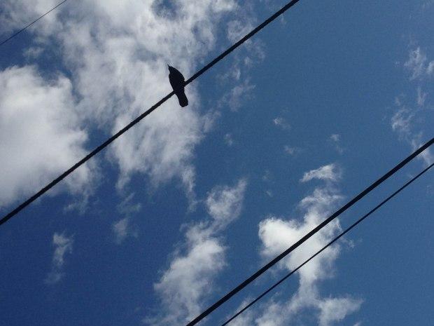 Birds - Erin J. Bernard